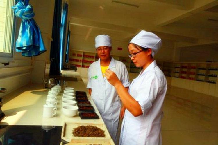100g/pc, high quality puer tea tree,gu shu material