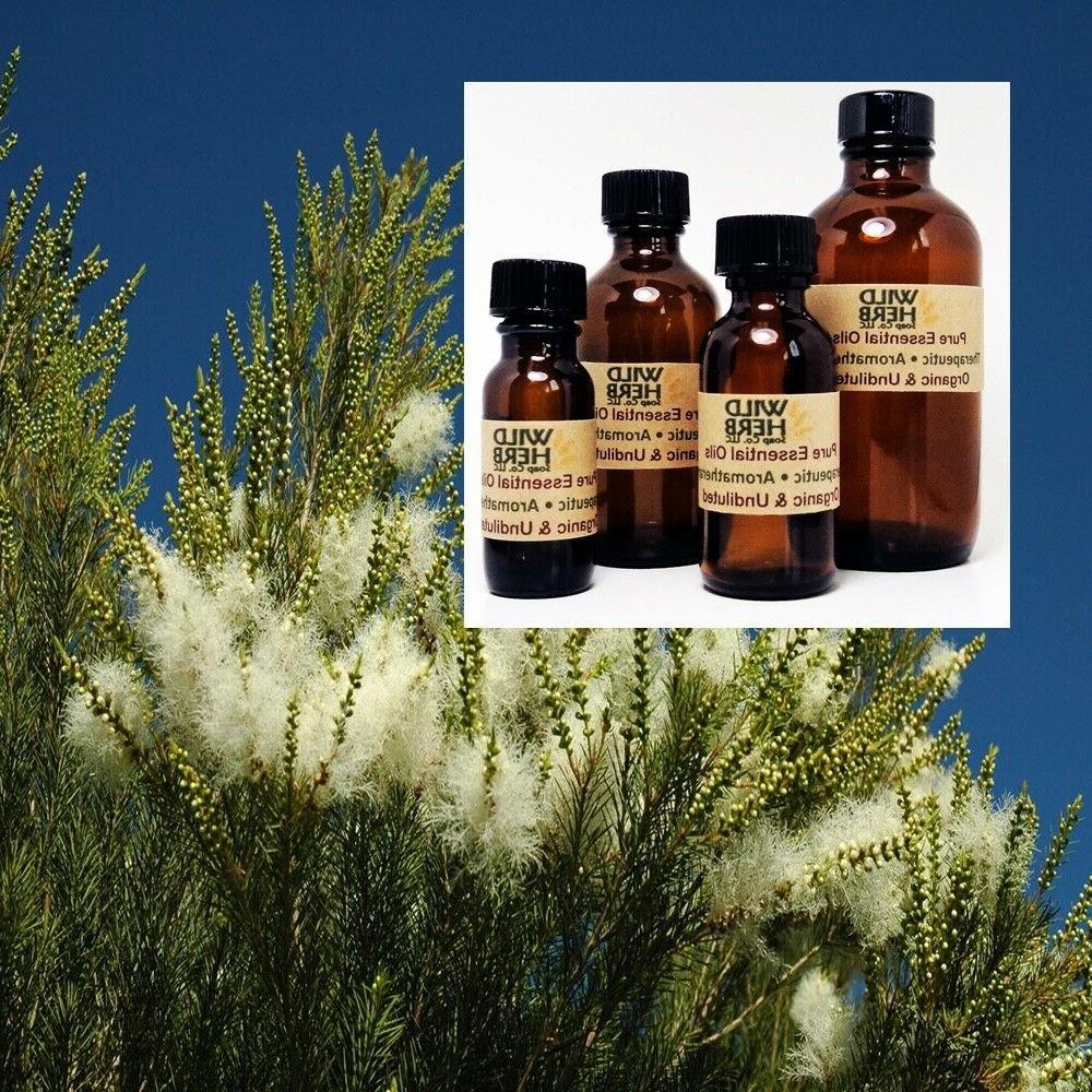 tea tree essential oil organic pure undiluted