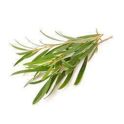 TEA TREE ESSENTIAL OIL Green Beauty AROMATHERAPY GLASS BOTTL